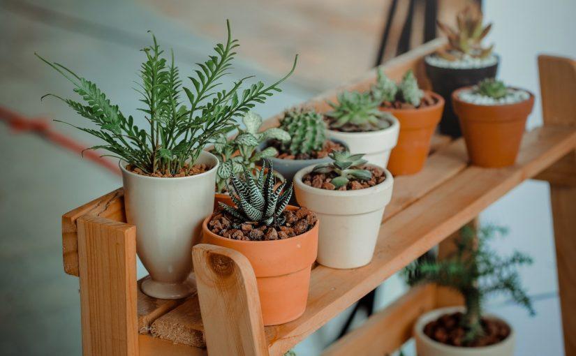 5 tips til at forlænge levetiden på dine planter